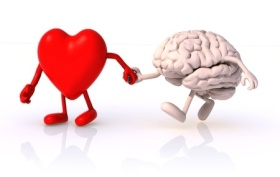15817143 - heart and brain that walk hand in hand, concept of health of walking