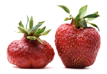 90754124 - pair of imperfect organic heirloom strawberries isolated closeup