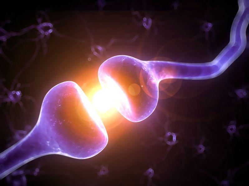 19040114 - 3d rendered illustration of a human receptor