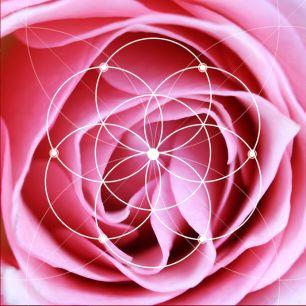 Illustration of spiral arrangement in nature. Fibonacci pattern