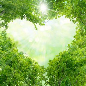 37167614 - green leaves in heart shape